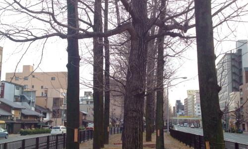 『京都おさんぽ#7』通りの中にずら〜っと立ち並ぶ銀杏並木。