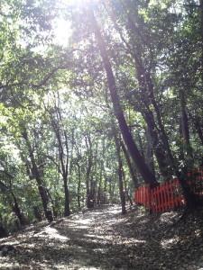 140529木漏れ日の船岡山
