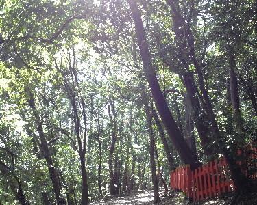 『京都おさんぽ#21』真夏日!