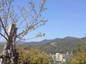 140529春の船岡山
