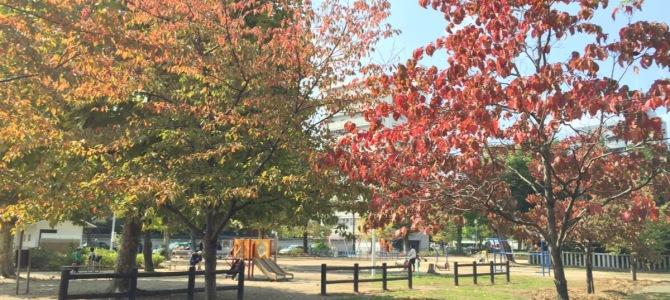『京都おさんぽ#36』朝の天神公園。紅と緑のコントラストを楽しむお散歩。
