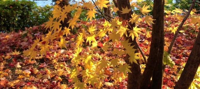 『京都おさんぽ#39』今年紅葉をご覧になれなかった方への贈り物〜見事な紅葉のご紹介
