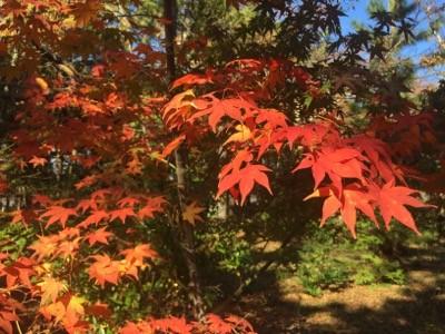 『京都おさんぽ#55』紅葉スポットご紹介〜見頃に先立ち、南禅寺に行ってきました。