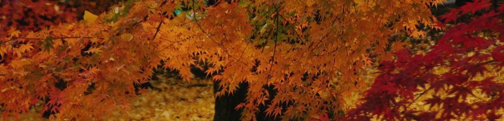 四季を通じて豊かな表情を見せる京都。