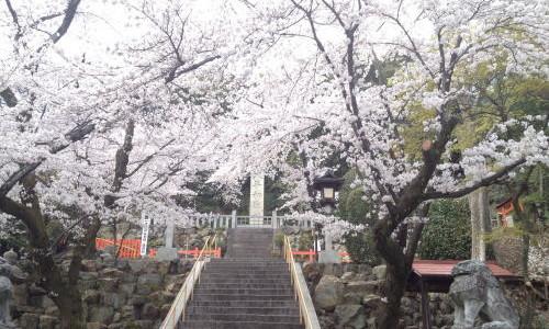 『京都おさんぽ#14』近隣さくら情報2014その3【建勲神社】