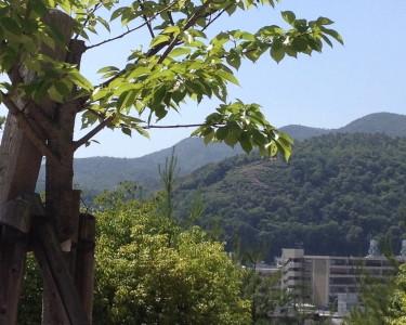『京都おさんぽ#20』船岡山にて~植物の生命力を感じられる2枚。