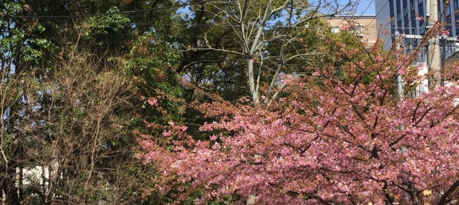 『京都おさんぽ#44』町を歩くと感じられる、そこまで来てる上京の春!