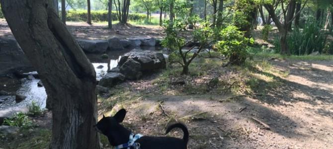 『京都おさんぽ#50』朝の梅小路公園をぶらーり