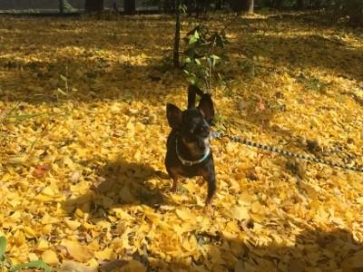 『京都おさんぽ#57』秋らしい2色を同時に楽しめました。西京極公園にて。
