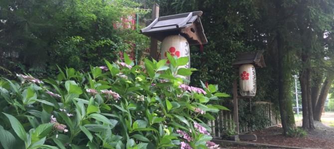 『京都おさんぽ#65』長雨のなか、ワンコと共に水火天満宮にて。