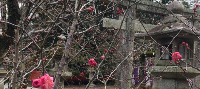 『京都おさんぽ#97』節分前の北野天満宮〜梅はもう暫く先でしょうか