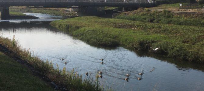 『京都おさんぽ#103』色づき始めました。初秋の賀茂川にて。