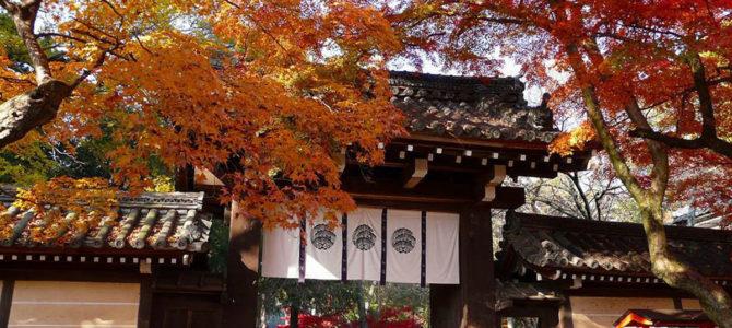『京都おさんぽ#105』新春の今宮神社へ。病気快癒・無病息災の祈りとともに。