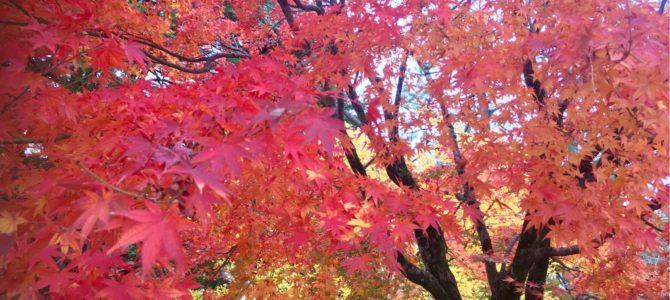 『京都おさんぽ#108』令和最初の紅葉〜京都御苑とすこし和音