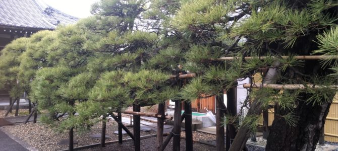 『京都おさんぽ#110』和音より徒歩30秒!猫寺のご紹介です!